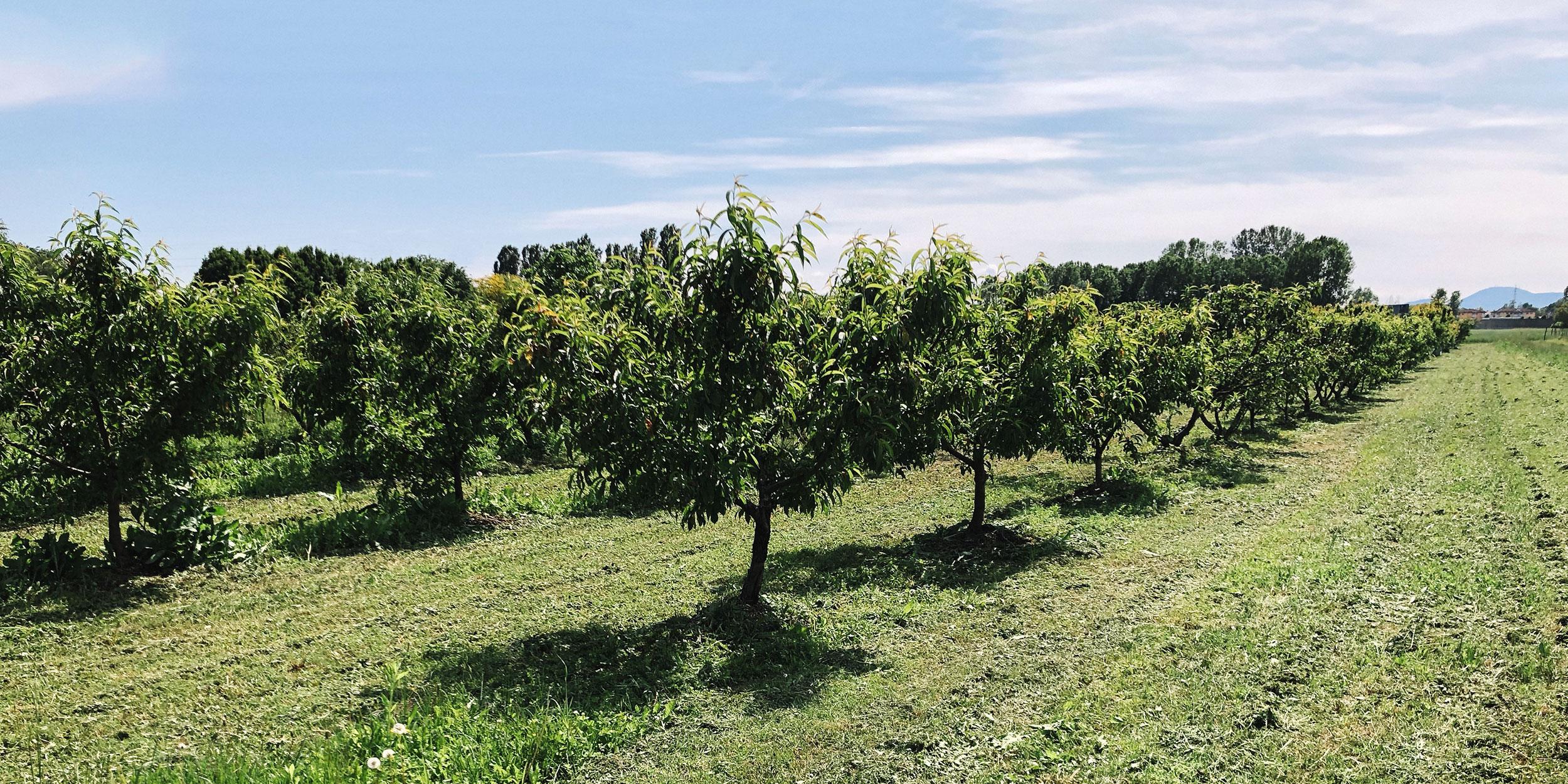 Crak birrificio artigianale agricolo