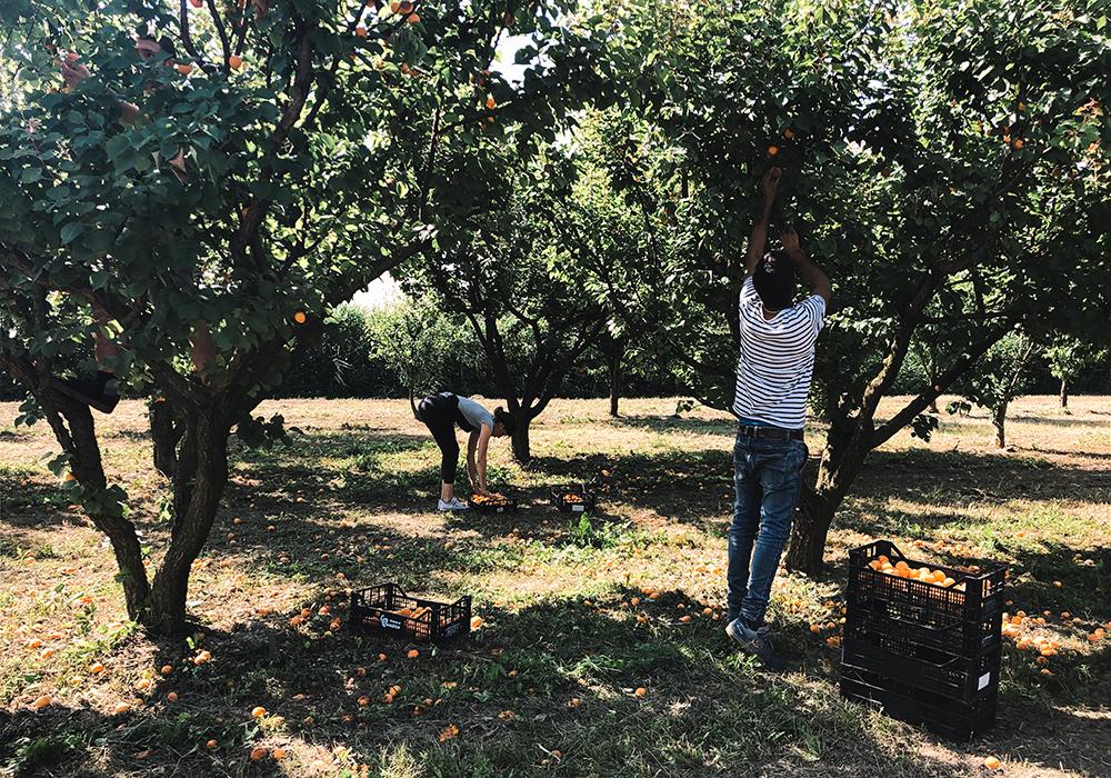 Frutteti Crak birrificio artigianale agricolo